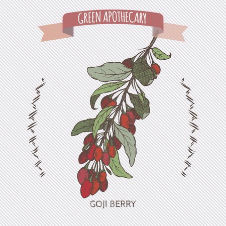 barbarum: Color Lycium barbarum aka Goji berry sketch. Green apothecary series. Great for traditional medicine or gardening. Illustration