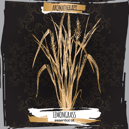 lemon grass: Cymbopogon aka lemongrass sketch on elegant black lace background. Aromatherapy series. Great for traditional medicine, perfume design, cooking or gardening. Illustration