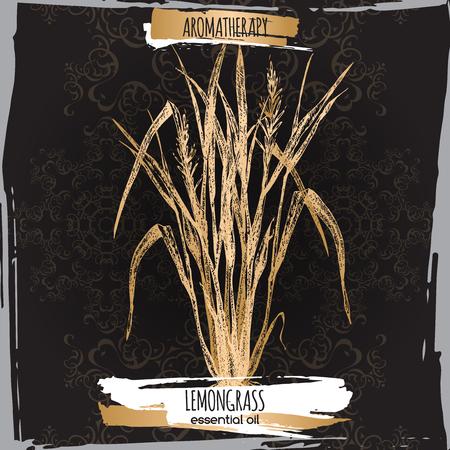 traditional medicine: Cymbopogon aka lemongrass sketch on elegant black lace background. Aromatherapy series. Great for traditional medicine, perfume design, cooking or gardening. Illustration