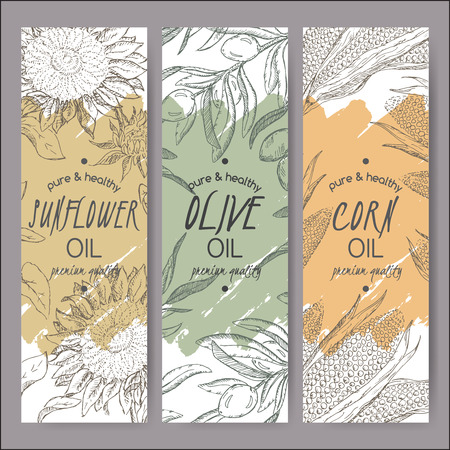 cooking oil: Set of 3 vector sunflower, olive, corn oil label templates. Based on had drawn sketch. Great for packaging and advertising design. Illustration