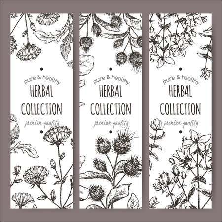 john: Set of 3 vector herbal tea labels with burdock, chicory and saint john wort hand drawn sketch. Placed on white background.