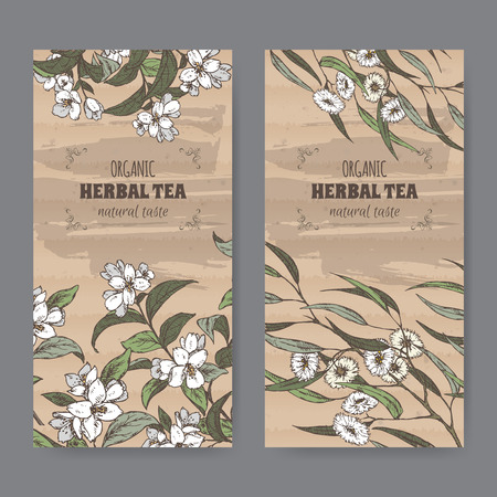 eucalyptus: Set of two color vintage labels for jasmine and eucalyptus herbal tea. Placed on cardboard texture. Illustration