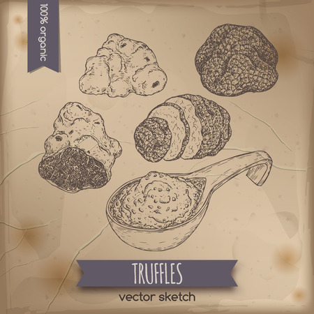 truffle: Vintage white, black truffles and truffle sauce sketch placed on old paper background. Great for restaurant, cafe, markets, grocery stores, organic shops, food label design. Illustration