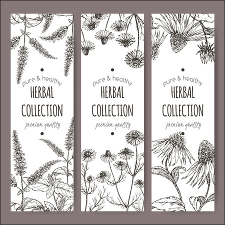 chamomile tea: Set of 3 vector herbal tea labels with peppermint, chamomile and echinacea on hand drawn sketch. Placed on white background.