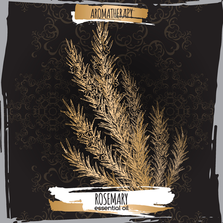 fragrance: Rosmarinus officinalis aka rosemary sketch on elegant black lace background. Aromatherapy series. Great for traditional medicine, perfume design, cooking or gardening.