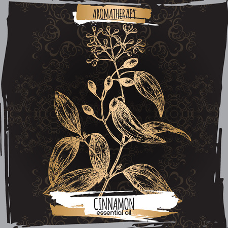 cinnamomum: Cinnamomum verum aka cinnamon sketch on elegant black lace background. Aromatherapy series. Great for traditional medicine, perfume design, cooking or gardening. Illustration
