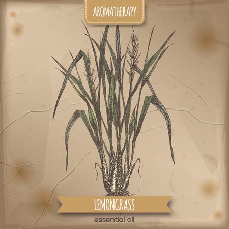 Couleur Cymbopogon aka lemongrass croquis sur fond vintage. série Aromathérapie. Idéal pour la médecine traditionnelle, la conception de parfum, la cuisine ou le jardinage.