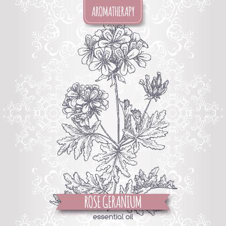 Pelargonium graveolens aka rose geranium sketch on elegant lace background. Aromatherapy series. Great for traditional medicine, perfume design, cooking or gardening.