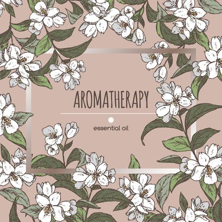 Elegant frame sjabloon met kleur Jasminum officinale aka gemeenschappelijke jasmijn schets. Aromatherapie serie. Zeer geschikt voor de traditionele geneeskunde, parfum ontwerp, koken of tuinieren.