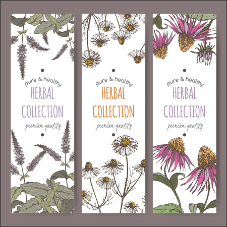 chamomile tea: Set of three color vector herbal tea labels with peppermint, chamomile and echinacea based on hand drawn sketch.