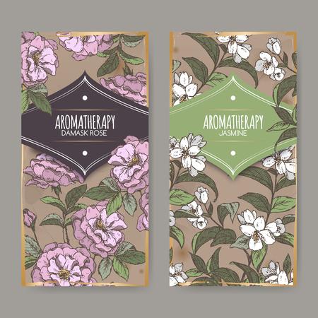 Set van twee labels met damast roos en jasmijn kleur schets op vintage achtergrond. Aromatherapie serie. Zeer geschikt voor de traditionele geneeskunde, parfum ontwerp, koken of tuinieren labels.