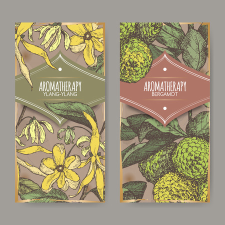 Set of two labels with ylang-ylang and bergamot orange color sketch on vintage background. Aromatherapy series. Great for traditional medicine, perfume design, cooking or gardening labels.
