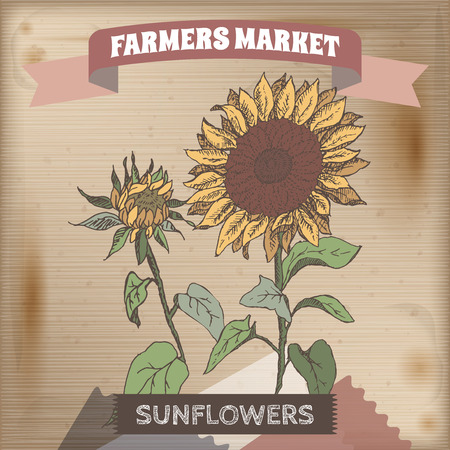 farmer market: Farmer market label with sunflower color sketch. Placed on original wooden texture. Includes hand drawn elements.