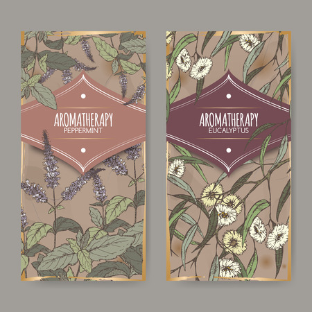 Set of two labels with Peppermint and Eucalyptus color sketch on vintage background. Aromatherapy series. Great for traditional medicine, perfume design, cooking or gardening labels.