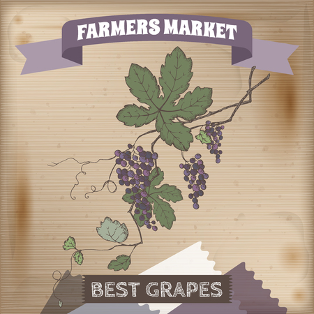 farmer market: Farmer market label with grapevine color sketch. Placed on original wooden texture. Includes hand drawn elements. Illustration