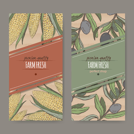 cardboard texture: Set of two labels with corn cobs and olive branch color sketch. Placed on original cardboard texture. Great for store and packaging design. Illustration