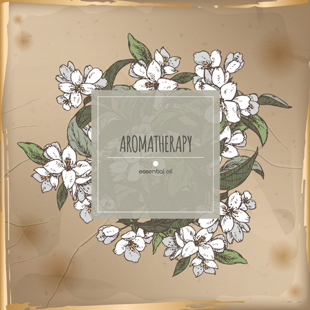 in common: Vintage center frame with Jasminum officinale aka common jasmine color sketch placed on old paper background. Aromatherapy series. Great for traditional medicine, perfume design, cooking or gardening.