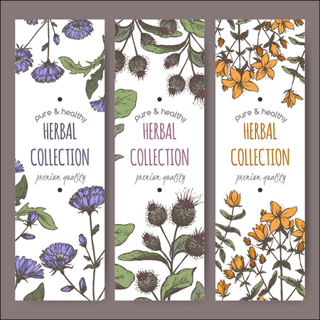 substitute: Set of three color vector herbal tea labels with burdock, chicory and saint john wort hand drawn sketch. Placed on white background. Illustration