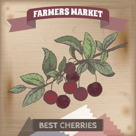 market gardening: Fresh cherry on a branch hand drawn color vector sketch on wooden background. Farmers market series. Great for cooking, gardening, farming or agricultural design.