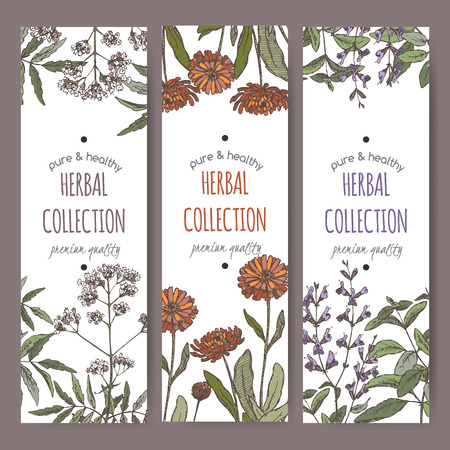 calendula flower: Set of three color vector herbal tea labels with valerian, calendula and sage on hand drawn sketch. Placed on white background.