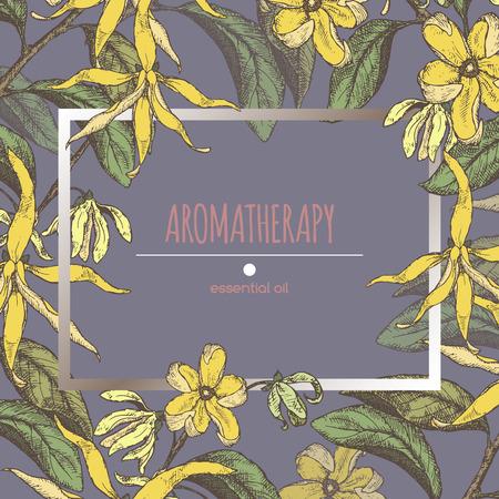 Kleurenframe sjabloon met ylang-ylang schets. Aromatherapie serie. Zeer geschikt voor de traditionele geneeskunde, parfum ontwerp, koken of tuinieren. Stock Illustratie