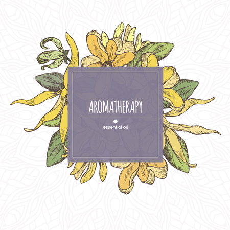 Elegant color center frame template with ylang-ylang sketch. Aromatherapy series. Great for traditional medicine, perfume design, cooking or gardening. Vector Illustration