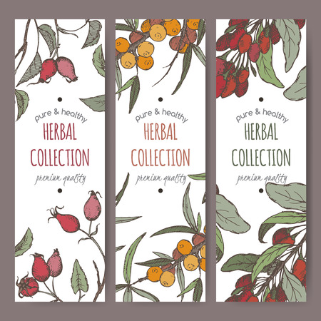 lycium: Set of tree color vector herbal tea labels with common sea buckthorn, goji berry and dog rose fruit hand drawn sketch. Placed on white background.
