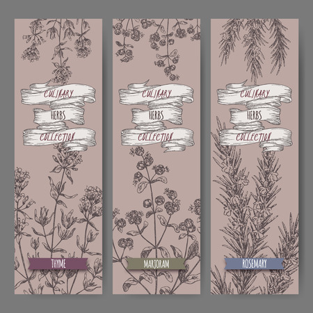 marjoram: Set of three vector banners with thyme, marjoram, rosemary sketch. Culinary herbs collection. Great for cooking, medical, gardening design.