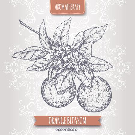 orange blossom: Orange blossom sketch on elegant lace background. Aromatherapy series. Great for traditional medicine, perfume design, cooking or gardening. Illustration