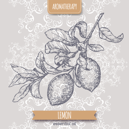 limon: Citrus limon aka lemon branch sketch on elegant lace background. Aromatherapy series. Great for traditional medicine, perfume design, cooking or gardening.
