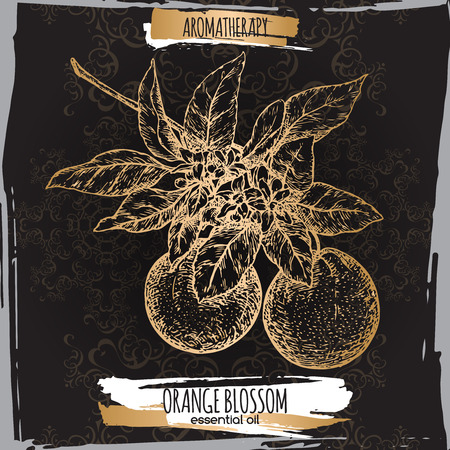 orange blossom: Orange blossom sketch on elegant back lace background. Aromatherapy series. Great for traditional medicine, perfume design, cooking or gardening.