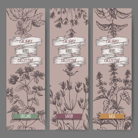 vulgare: Set of three vector banners with oregano, savory, basil sketch. Culinary herbs collection. Great for cooking, medical, gardening design.