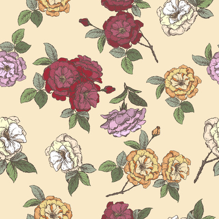 Seamless pattern based on color Rosa damascene aka Damask rose sketch. Aromatherapy series. Great for texture design, traditional medicine, perfume design, cooking or gardening.  イラスト・ベクター素材