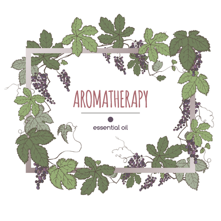 Elegant frame template with color grapes fruit and leaves sketch. Aromatherapy series. Great for winery, grocery store, perfume design, cooking or gardening.