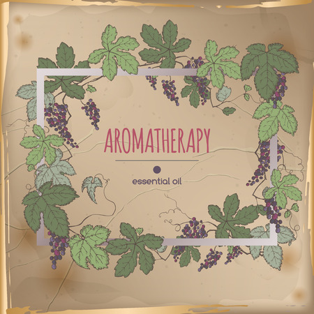 Elegant frame template with color grapes fruit and leaves sketch on vintage background. Aromatherapy series. Great for winery, grocery store, perfume design, cooking or gardening.