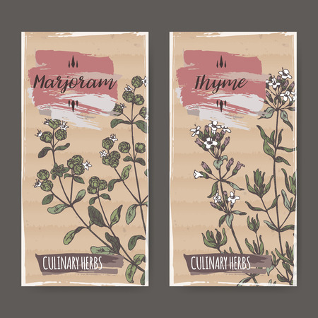 marjoram: Two color labels with thyme and marjoram sketch. Culinary herbs collection. Great for cooking, medical, gardening design.