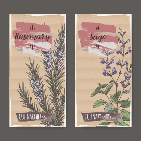 salvia: Two color labels with sage and rosemary sketch. Culinary herbs collection. Great for cooking, medical, gardening design.