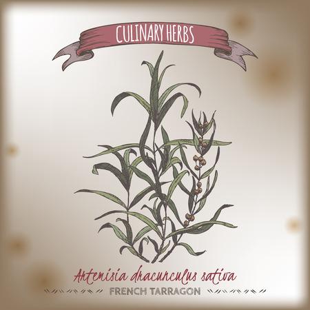Artemisia dracunculus sativa aka francuskiego koloru tarragon ręcznie narysowanego szkicu na tle rocznika. Zbiory ziół kulinarnych. Świetnie nadaje się do gotowania, medycyny, projektowania ogrodniczego. Ilustracje wektorowe