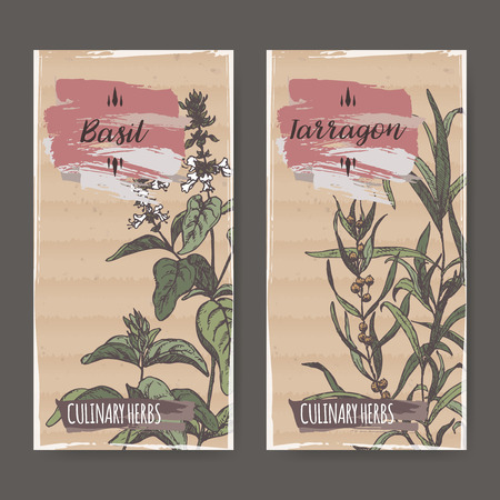 tarragon: Two color labels with basil and tarragon sketch. Culinary herbs collection. Great for cooking, medical, gardening design.
