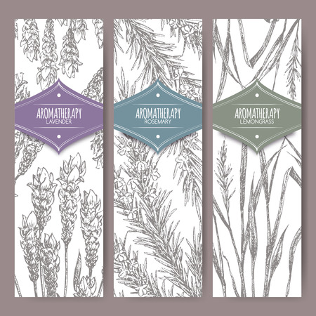 Set of three labels with lavender, rosemary and lemongrass. Aromatherapy series. Great for traditional medicine, perfume design, cooking or gardening labels. Illustration