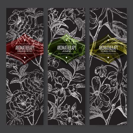 黒い背景にダマスク ローズ、ジャスミン、イランイランのスケッチ 3 バナーのセットです。アロマセラピー シリーズ。伝統的な医学、香水デザイン