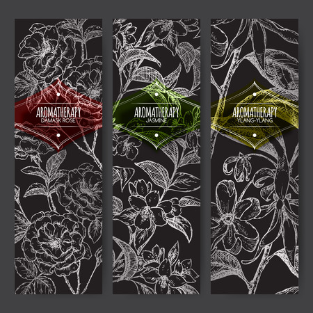 Set of 3 banners with Damask rose, jasmine, ylang-ylang sketch on black background. Aromatherapy series. Great for traditional medicine, perfume design, cooking or gardening.