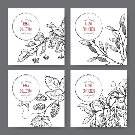 common hop: Set of four herbal labels with lime tree, barberry, mistletoe and hop hand drawn sketch. Placed on white background. Illustration