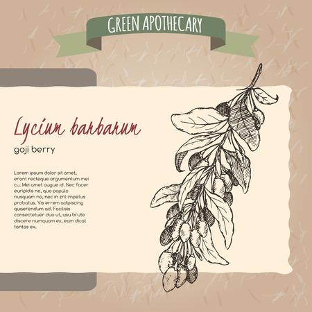 lycium: Lycium barbarum aka Goji berry sketch.