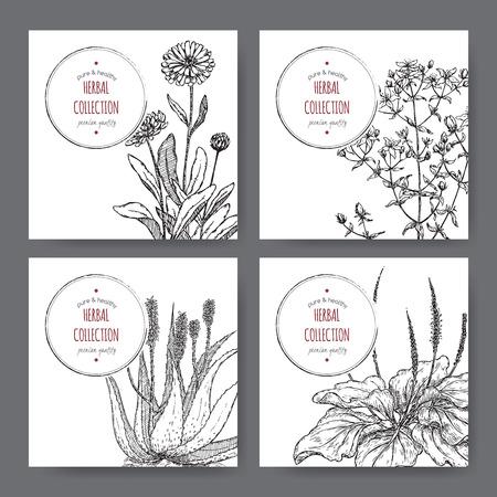 calendula: four herbal labels with calendula, saint john wort, aloe, plantago