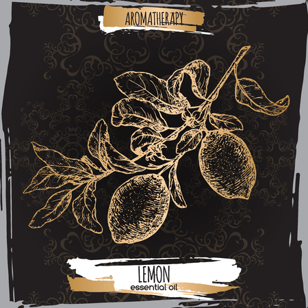 limon: Citrus limon aka lemon branch sketch on elegant black lace background.