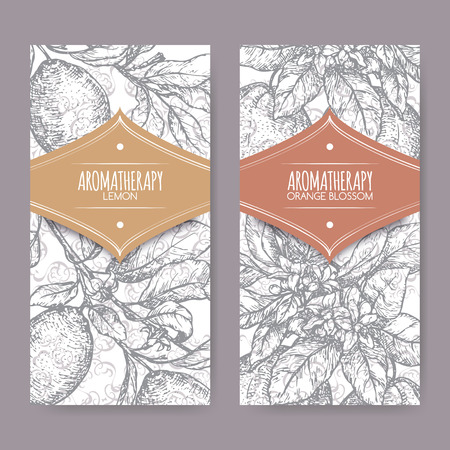 limon: Ttwo labels with Orange blossom and lemon branch sketch