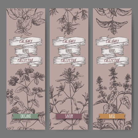 Set of three vector banners with oregano, savory, basil sketch.