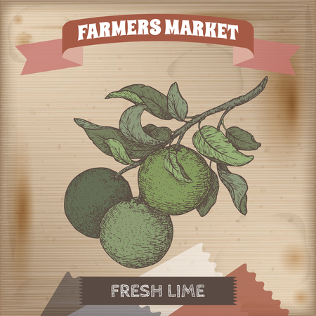 Color fresh lime fruits on a branch hand drawn sketch. Farmers market collection. Great for farming and agricultural design. Ilustração