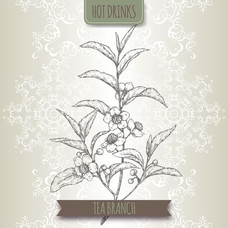 Tea plant aka tea Camellia sinensis branches with leaves and flowers.